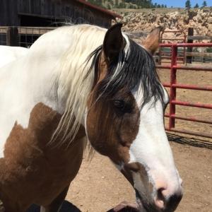 RCC - Sanctuary Horses